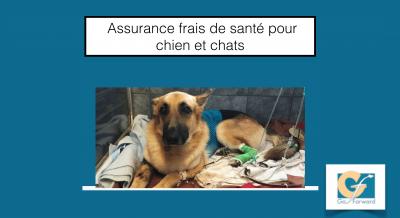 assurance-chien-chat-canisfelis
