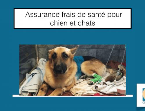 L'assurance santé pour chiens et chats Canis Felis